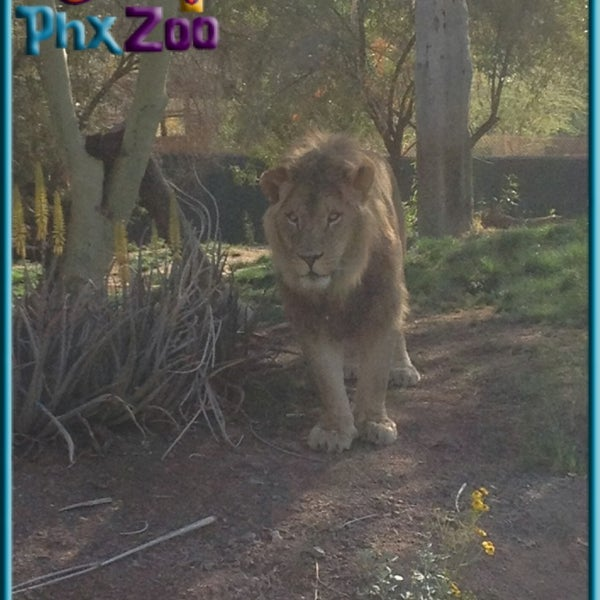 Снимок сделан в Phoenix Zoo пользователем Michael B. 3/24/2013