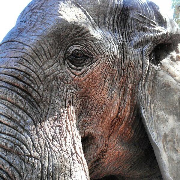 Снимок сделан в Phoenix Zoo пользователем Ellia Ivy M. 9/17/2012