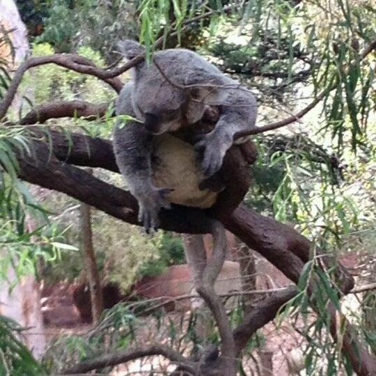 9/14/2012 tarihinde Ruth H.ziyaretçi tarafından Auckland Zoo'de çekilen fotoğraf