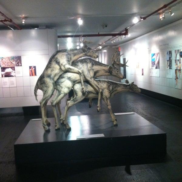 12/31/2012에 Natasha님이 Museum of Sex에서 찍은 사진