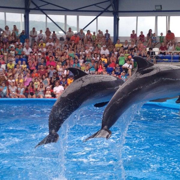 лечить дельфинарий в рязани фото почему