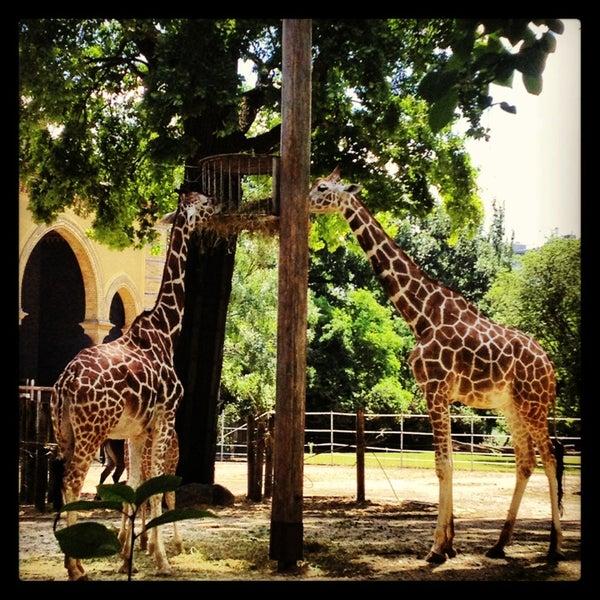 6/22/2013에 Dina님이 Zoologischer Garten Berlin에서 찍은 사진