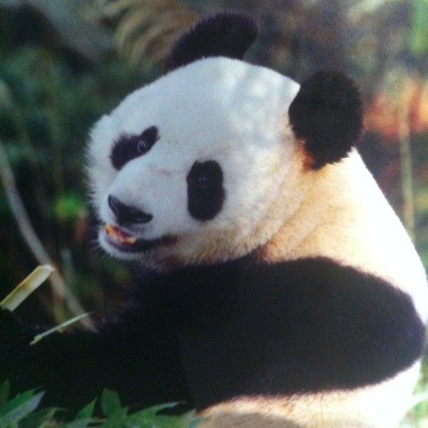 Foto tirada no(a) Singapore Zoo por Elena em 3/18/2013