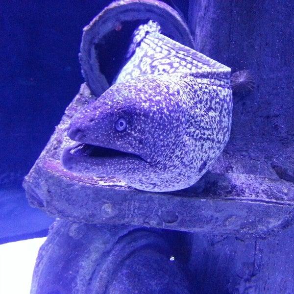 Das Foto wurde bei Antalya Aquarium von Sergey L. am 6/21/2013 aufgenommen
