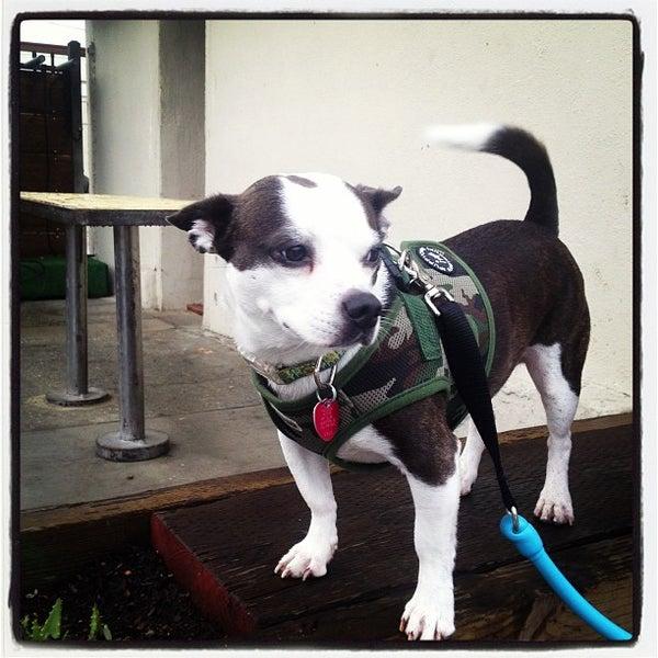 Foto tirada no(a) Dogtown Coffee por Assaf R. em 12/24/2012
