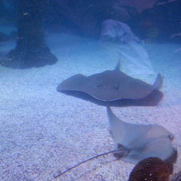 4/19/2013에 Tiff W.님이 SEA LIFE Minnesota Aquarium에서 찍은 사진