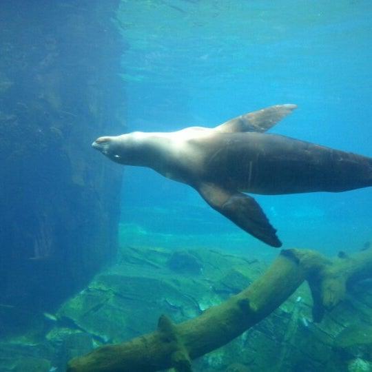 10/26/2012 tarihinde Peter K.ziyaretçi tarafından Auckland Zoo'de çekilen fotoğraf