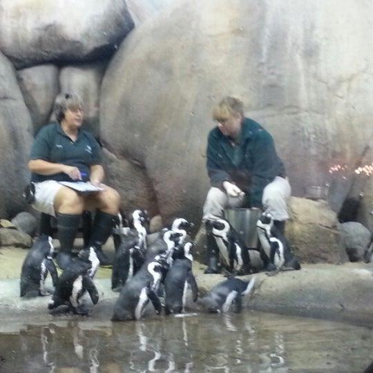 10/21/2012 tarihinde Jon L.ziyaretçi tarafından Minnesota Zoo'de çekilen fotoğraf