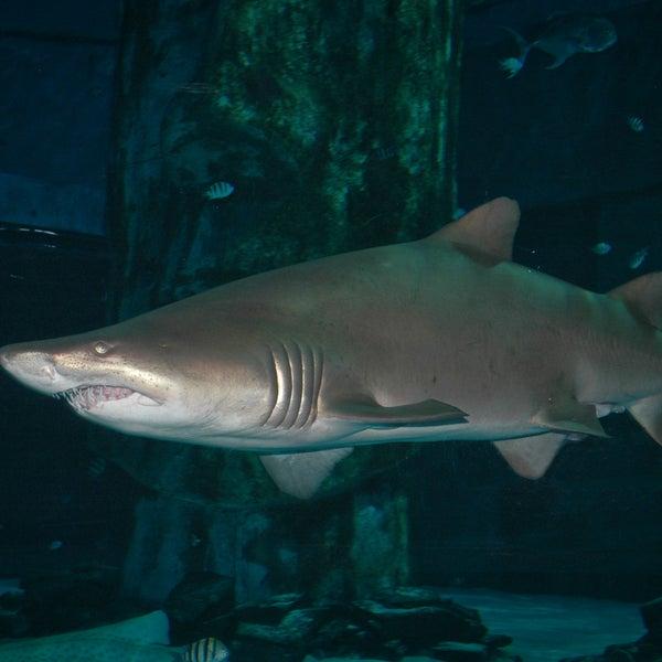 8/15/2013에 SEA LIFE Minnesota Aquarium님이 SEA LIFE Minnesota Aquarium에서 찍은 사진