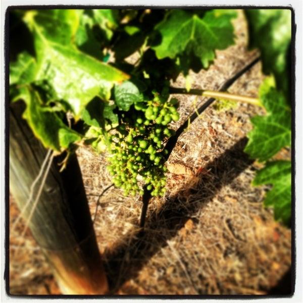 รูปภาพถ่ายที่ Orfila Vineyards and Winery โดย Rachel A. เมื่อ 5/28/2013