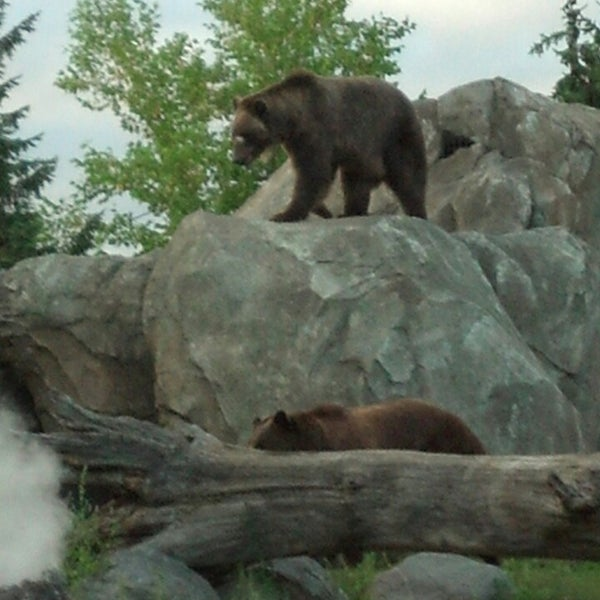 8/10/2013 tarihinde Steve H.ziyaretçi tarafından Minnesota Zoo'de çekilen fotoğraf