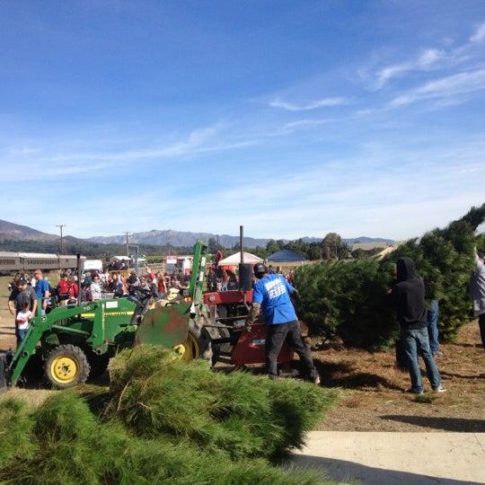 Photo taken at Santa Paula Christmas Tree Farm by Betsy M. on 12/9 - Photos At Santa Paula Christmas Tree Farm - Field In Santa Paula