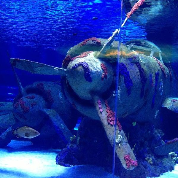 Das Foto wurde bei Antalya Aquarium von Mirac🚲 K. am 12/31/2012 aufgenommen