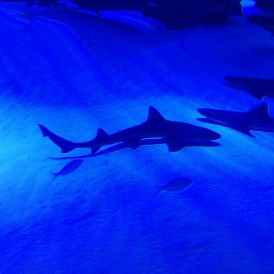 Das Foto wurde bei Antalya Aquarium von RasimS am 12/9/2012 aufgenommen