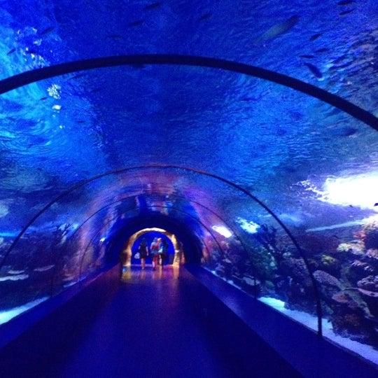 Das Foto wurde bei Antalya Aquarium von Yiğit B. am 11/4/2012 aufgenommen