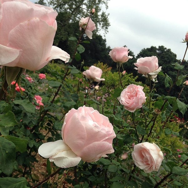 4/13/2014 tarihinde James M.ziyaretçi tarafından Descanso Gardens'de çekilen fotoğraf