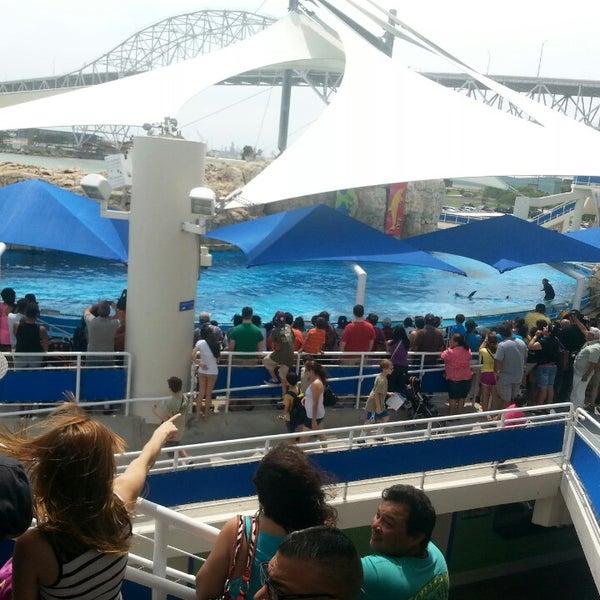 5/18/2013 tarihinde Sita G.ziyaretçi tarafından Texas State Aquarium'de çekilen fotoğraf
