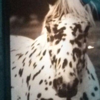 1/19/2013에 Lorenzo A.님이 The Spotted Horse Tavern에서 찍은 사진
