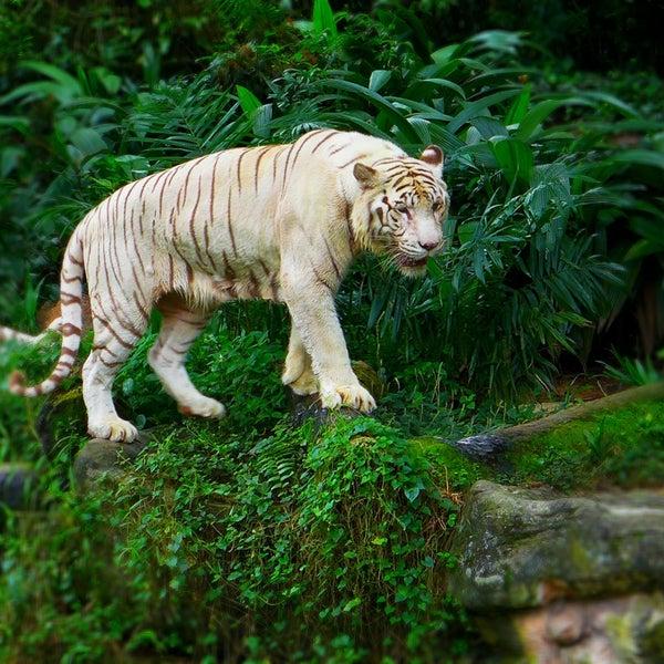 Foto diambil di Singapore Zoo oleh R L. pada 3/3/2013