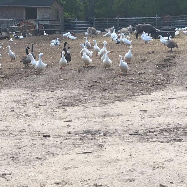 Makinajian Poultry Farm Farm In Huntington