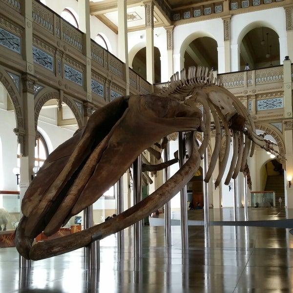 10/14/2014にWedder R.がMuseo Nacional de Historia Naturalで撮った写真
