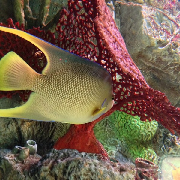 6/9/2013에 Ken T.님이 SEA LIFE Minnesota Aquarium에서 찍은 사진