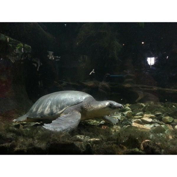 Foto diambil di Singapore Zoo oleh Moses A. pada 4/14/2013