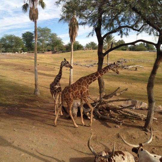 Снимок сделан в Phoenix Zoo пользователем Peter F. 10/23/2012