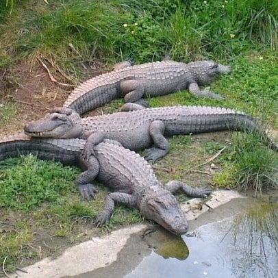9/29/2012 tarihinde Alexeyziyaretçi tarafından Auckland Zoo'de çekilen fotoğraf