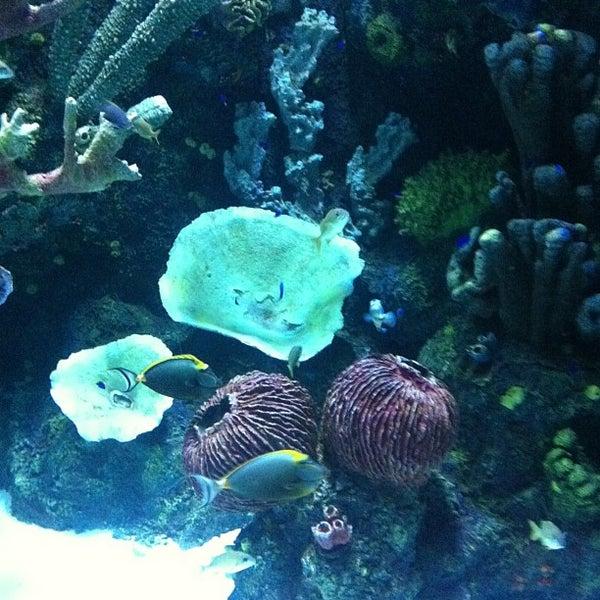 4/28/2013에 Onur님이 Antalya Aquarium에서 찍은 사진