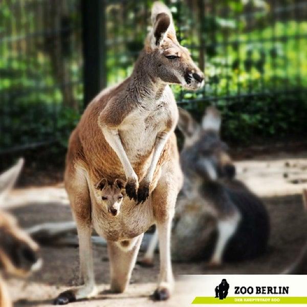 4/25/2013에 Jana M.님이 Zoologischer Garten Berlin에서 찍은 사진