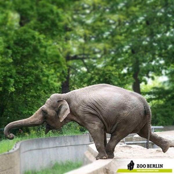 5/19/2013에 Jana M.님이 Zoologischer Garten Berlin에서 찍은 사진