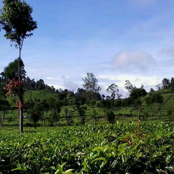 Photos At Agrowisata Pranatirta Rancabali 87 Visitors