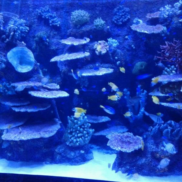 Das Foto wurde bei Antalya Aquarium von Hatice ç. am 5/9/2013 aufgenommen