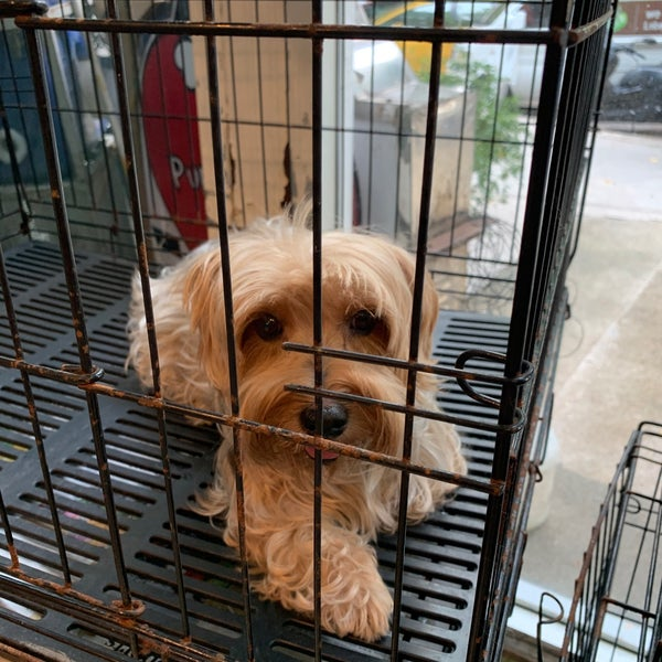"Puppy Love Pet Shop À¸""ลองเตย À¸""ลองเตย À¸à¸£ À¸‡à¹€à¸—พมหานคร"