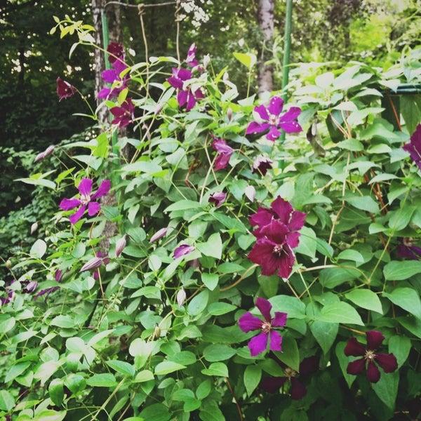 Сад нуждается во вьющихся растениях, чтобы закрыть голые опоры со времён Павла Ивановича.