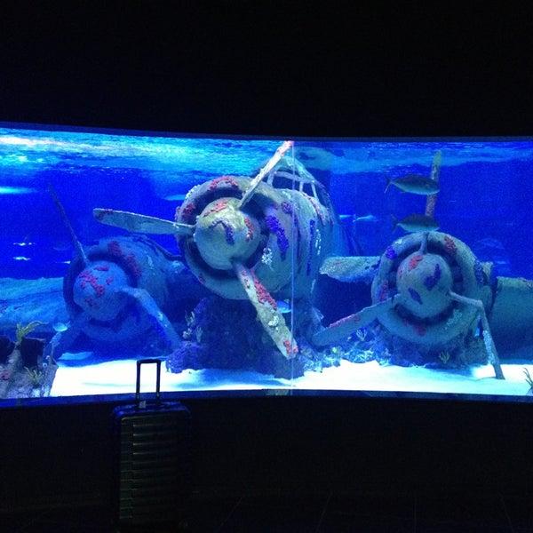 Das Foto wurde bei Antalya Aquarium von Fevzi T. am 3/14/2013 aufgenommen
