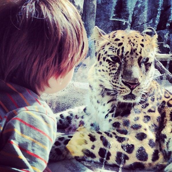 10/13/2013 tarihinde Jaime T.ziyaretçi tarafından Minnesota Zoo'de çekilen fotoğraf