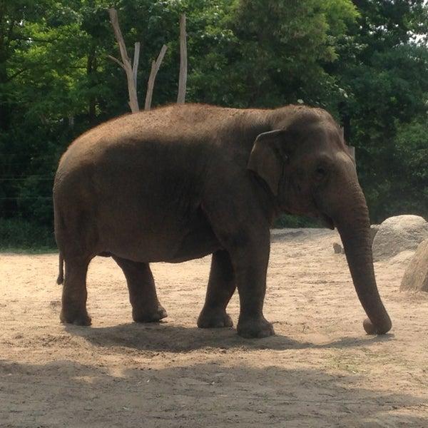 6/9/2013에 Михаил님이 Zoologischer Garten Berlin에서 찍은 사진