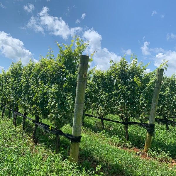 Снимок сделан в Early Mountain Vineyards пользователем Annie W. 8/9/2020