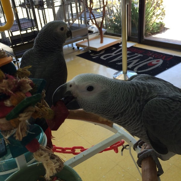 Omar's Exotic Birds - Pet Store in Santa Monica