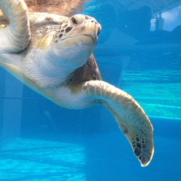6/24/2013にPedroがTexas State Aquariumで撮った写真