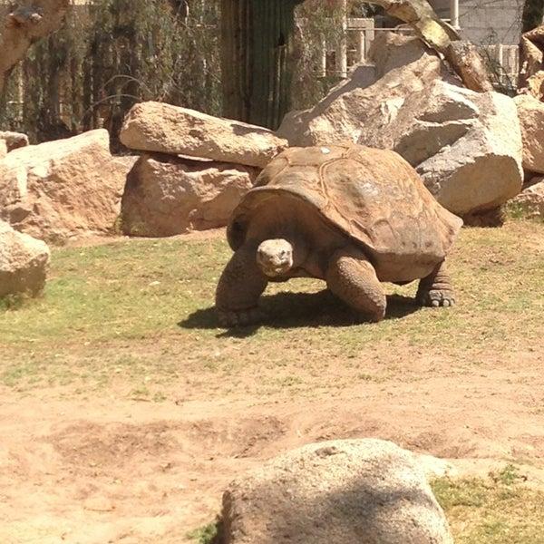 Снимок сделан в Phoenix Zoo пользователем Erin B. 4/7/2013