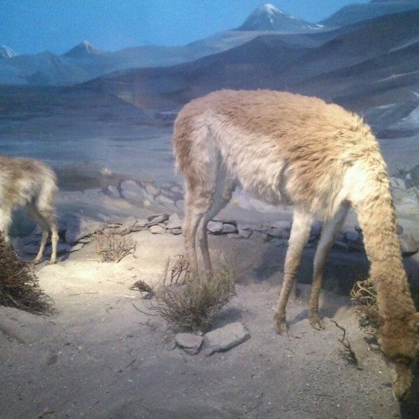 7/14/2013にSusana PereiraがMuseo Nacional de Historia Naturalで撮った写真