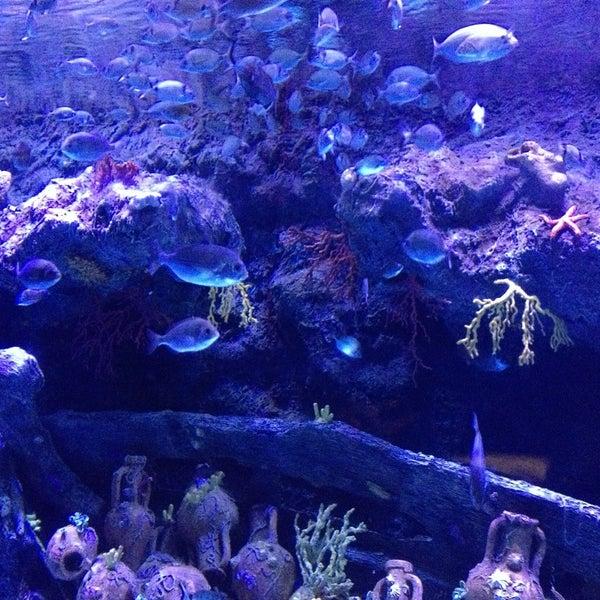 Das Foto wurde bei Antalya Aquarium von Алина И. am 5/8/2013 aufgenommen