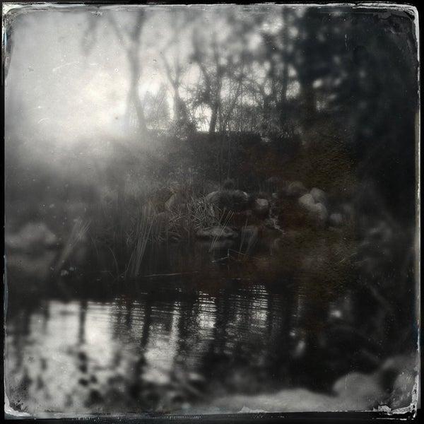 1/31/2013 tarihinde Geoff Y.ziyaretçi tarafından Descanso Gardens'de çekilen fotoğraf