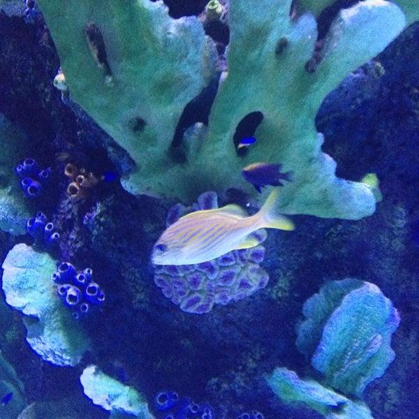 Das Foto wurde bei Antalya Aquarium von Green D. am 4/6/2013 aufgenommen