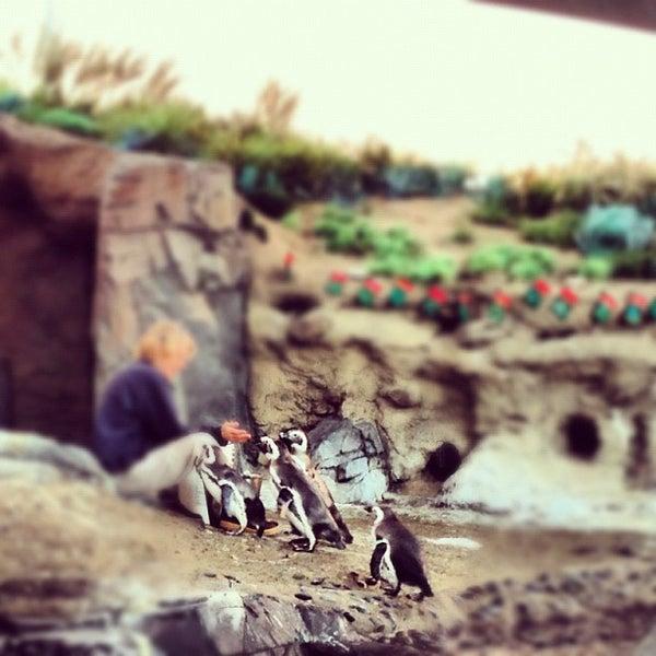 Photo prise au Aquarium of the Pacific par ʇɹǝql∀  ɹ. le12/4/2012