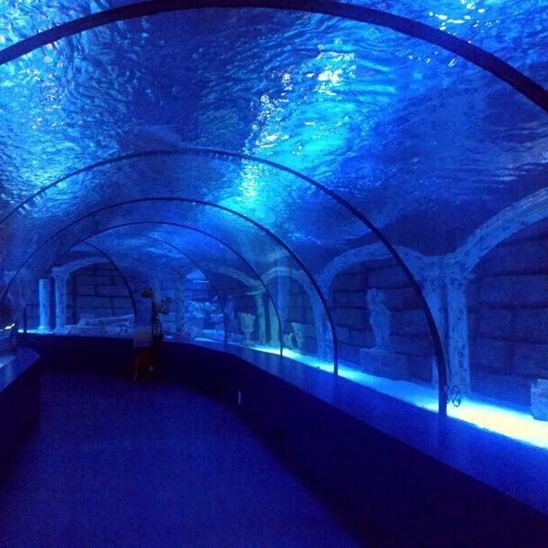 Das Foto wurde bei Antalya Aquarium von Ксения Б. am 5/3/2013 aufgenommen