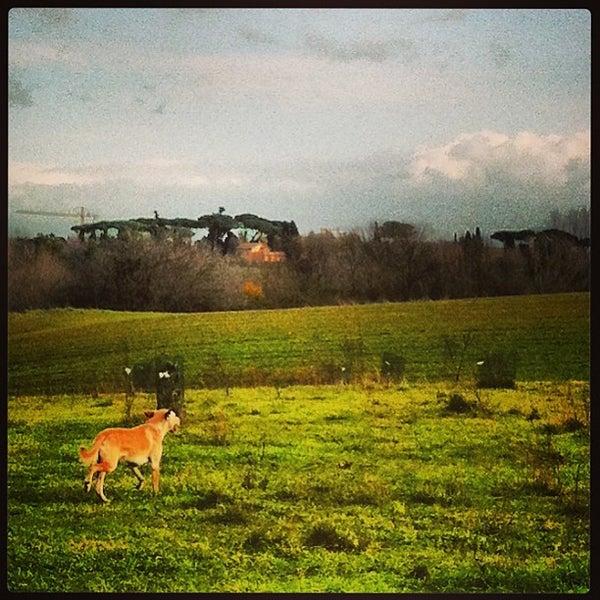 12/26/2012にelena p.がParco Regionale dell'Appia Anticaで撮った写真
